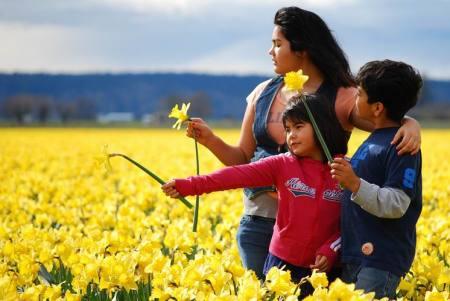 sea-of-daffodils2